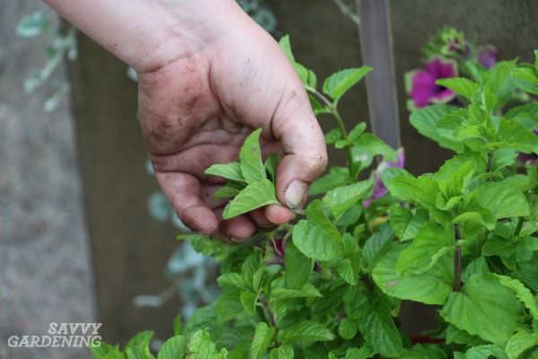 Container Gardening Tips for Proper Maintenance