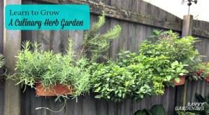 Learn to grow culinary herbs.