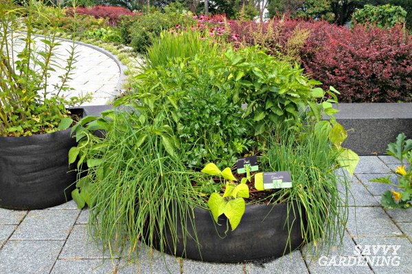 Grow culinary herbs in containers or garden beds.