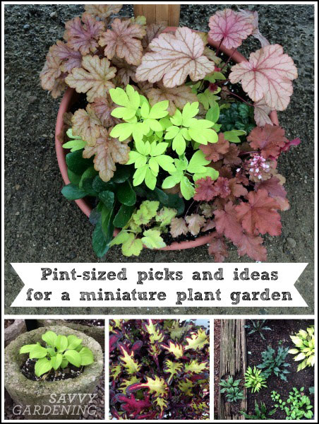 Pint-sized picks and ideas for a miniature plant garden. From hostas and coleus to heucheras and flowers, discover plant suggestions and planting inspiration!