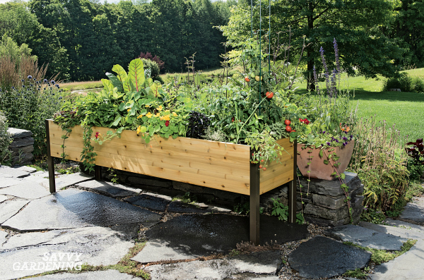 Gardening in an elevated raised planter is a great way to grow! (AD)