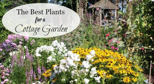 cottage garden plant list A List of Cottage Garden Plants; The Ultimate Guide