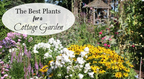 A List Of Cottage Garden Plants The Ultimate Guide