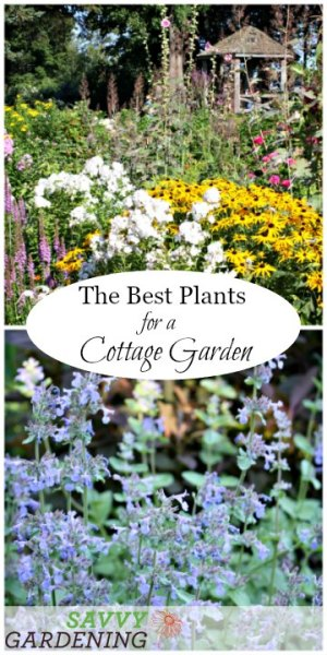 cottage garden plant list A List of Cottage Garden Plants; The Ultimate Guide