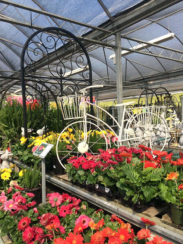 Plant Nursery And Garden Center Tips To, Blooms Garden Center