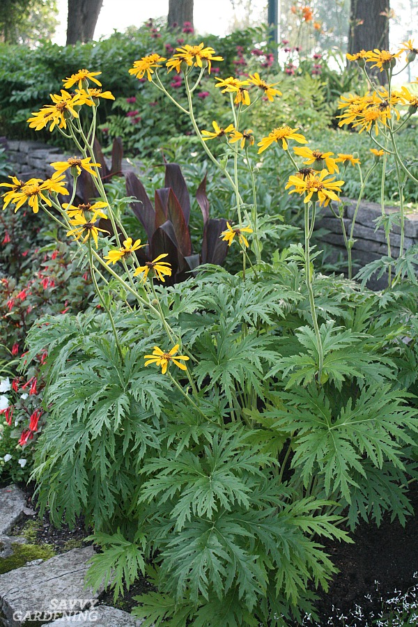 Shade loving perennial flowers 15 beautiful choices for your garden tall flowering perennials for the shade mightylinksfo