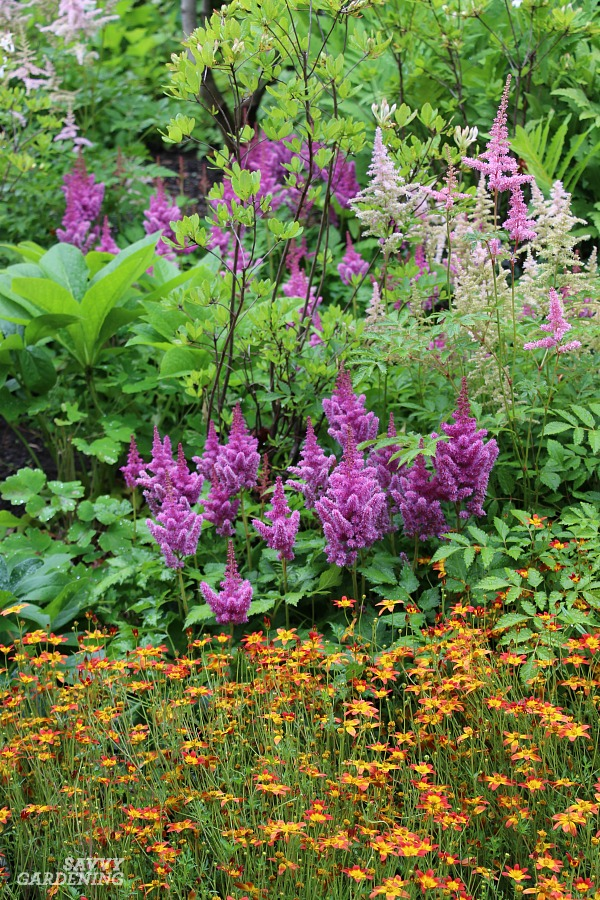 Shade Perennials With Colorful Flowers.