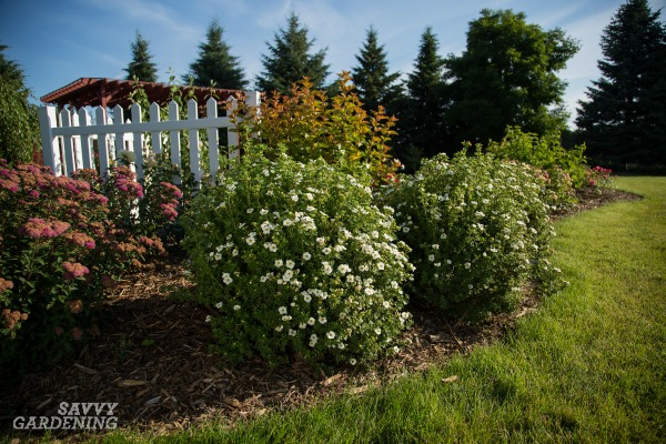 Shrubs that attract pollinators are essential for a pollinator-friendly yard. (AD)