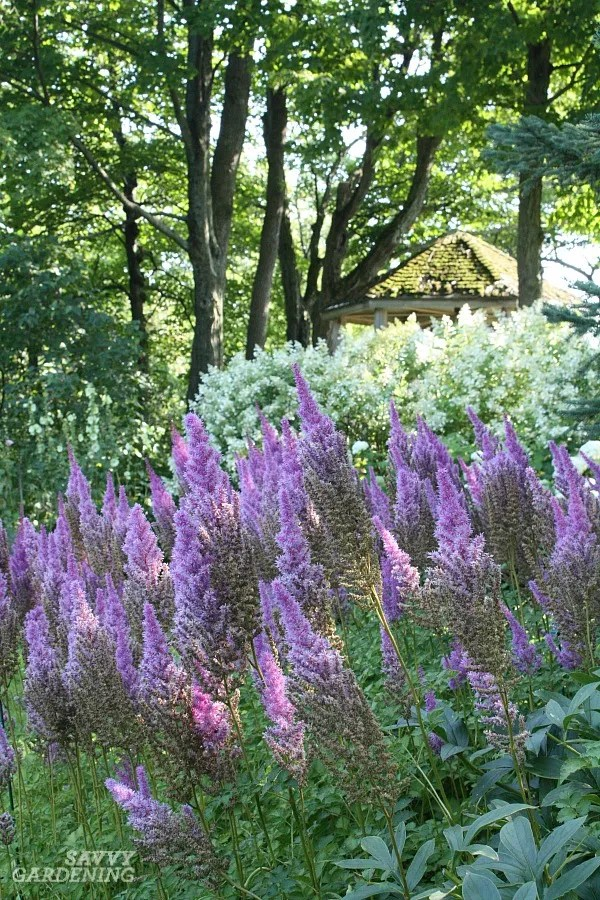 Flowering shade perennials include these top favorites.