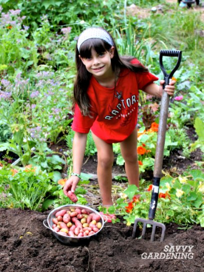 Potatoes are easy to grow and fun for kids to harvest.