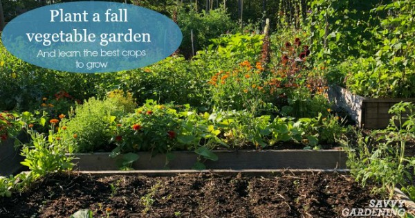 Plant a Fall Vegetable Garden with These Hardy Crops