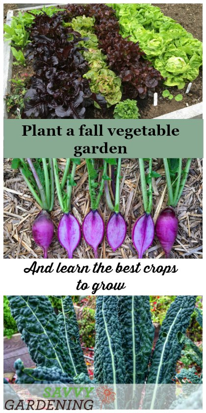 Plant a fall vegetable garden by sowing crops like lettuce, radishes, turnips, and spinach in late summer.
