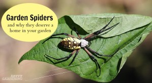 Garden spiders deserve a home in your garden.