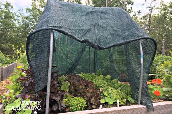 Use shade cloth to protect fall crops from the summer sun.