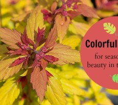 Colorful shrubs to add beauty to your garden. (AD)