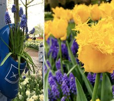 Bulb-planting tips from the Keukenhof gardens