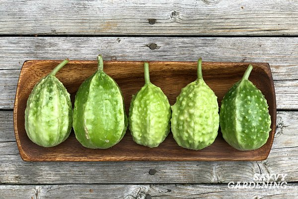 Burr Gherkins are a delicious and easy to grow unusual vegetable.