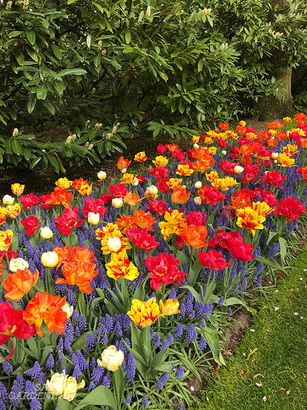 Scattering spring bulbs for a natural look