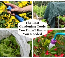 Discover the best gardening tools you didn't know you needed.