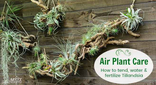 how to use fertilizer