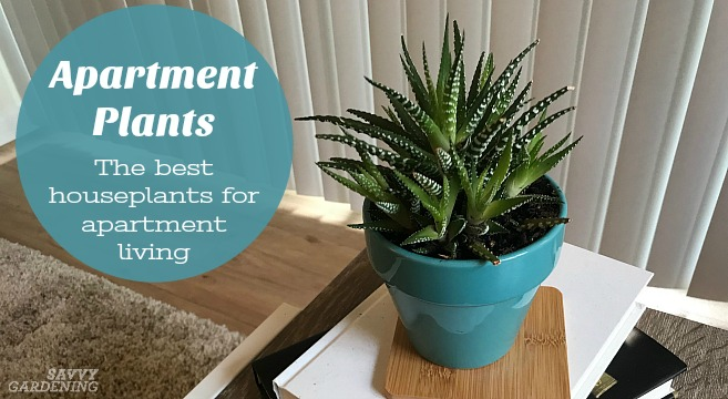 The best houseplants for apartments. 15 low-maintenance favorites.