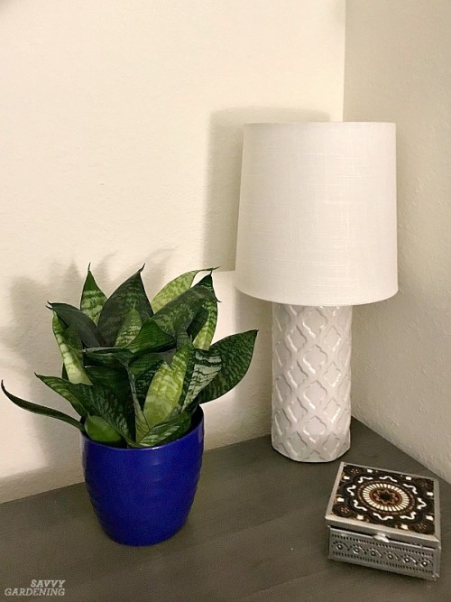 Indoor plants for small apartments must be low-maintenance and petite. Here are 15 perfect choices. #indoorgardening #houseplants
