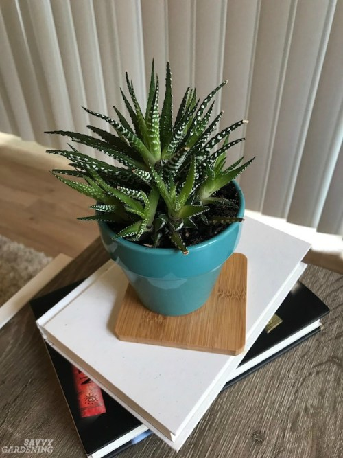 15 houseplants for apartments, from tabletops and bookcases, to shelves and floors, these are great choices. #indoorgardening #apartmentliving