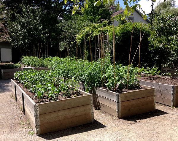 Raised beds with corners at the Toronto Botanical Garden