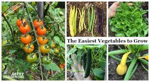 New to gardening or short on time? Stick to these easy-to-grow vegetables.