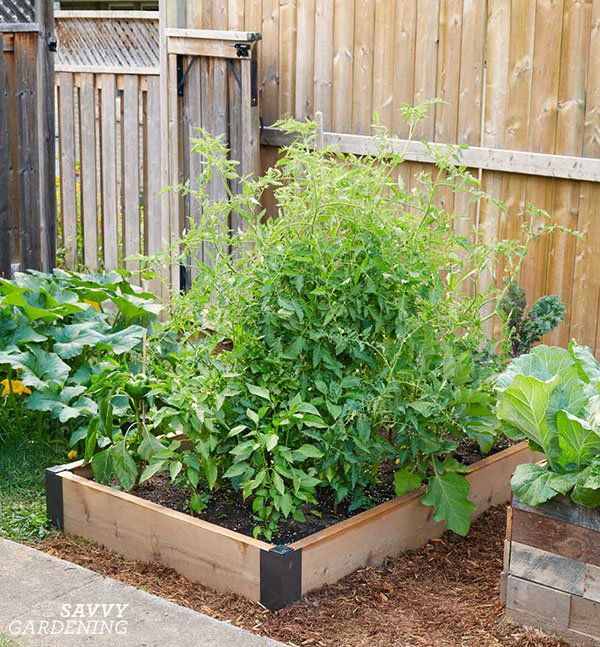 A raised bed using corners from Gardener's Supply Company