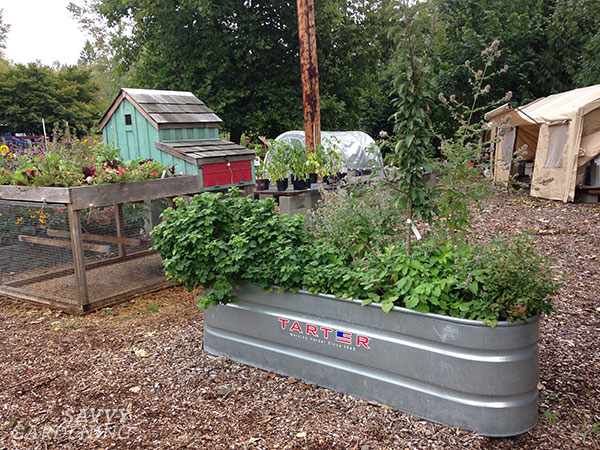 Stock tanks make perfect raised beds—no building required!