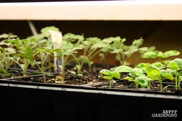 Use grow-lights to grow healthy seedlings