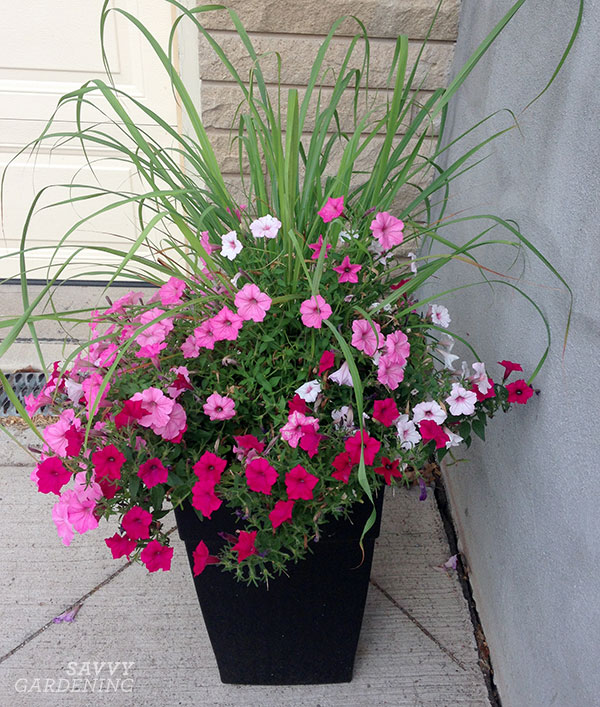 Container Plants For Full Sun Choices For Colour Foliage And Texture