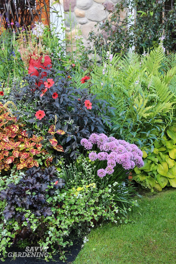 The best purple plants for pollinators.