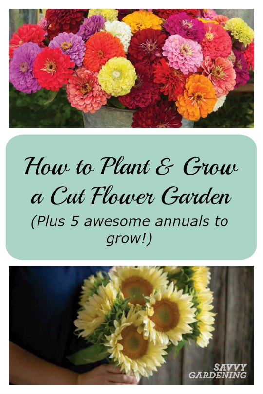 Learn how to plant, grow, and harvest cut flowers - plus discover 5 awesome annual flowers for cutting!