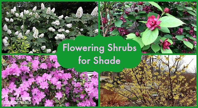 Savvy Gardening & Flowering Shrubs for Shade - Top Picks for the Yard \u0026 Garden