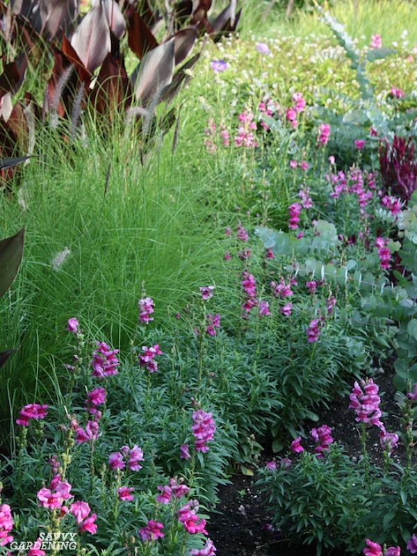 Deer-resistant annual plants for full sun.