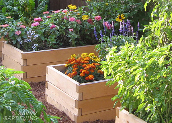 Planting flowers in a raised bed can attract valuable pollinators AND attract beneficial insects that will take care of some of the bad guys in the garden. #sponsored