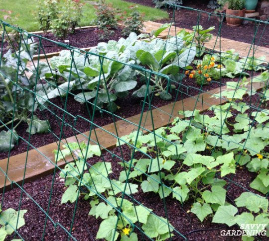 A cucumber trellis is a smart way to support vines.