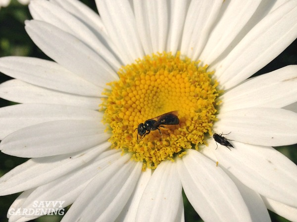 Garden pollinators should be appreciated and supported.