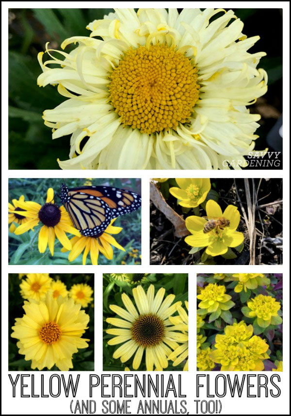 Add a little sunshine to your garden with yellow perennial flowers (and a few yellow annuals, too!)