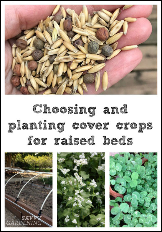 choosing and plant cover crops for raised beds