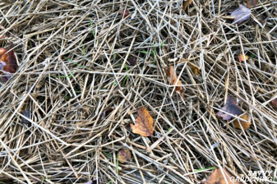 Straw is a great source of carbon in a compost bin.