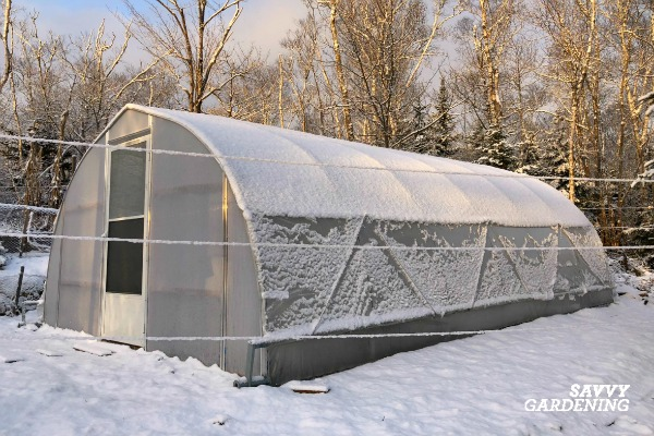 A greenhouse provides shelter to winter vegetables.