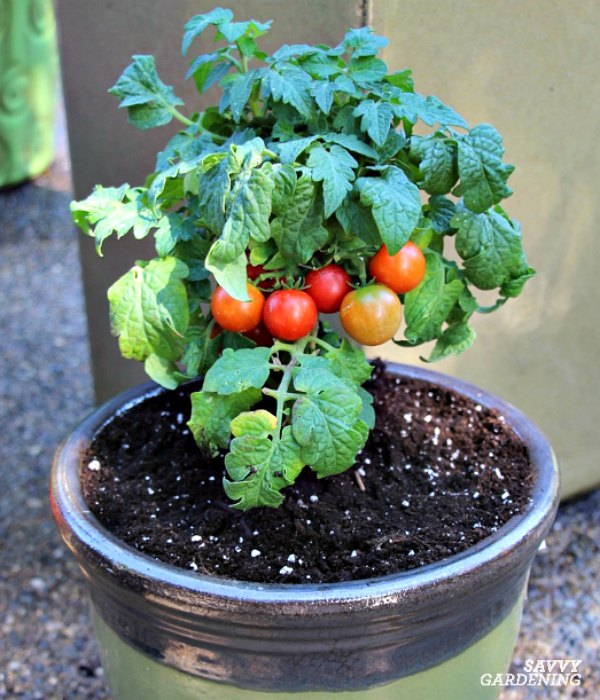 The Best Tomatoes For Containers And Tips For Growing Big Yields