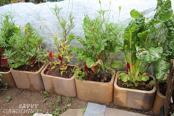 Clay flue liners provide extra planting space in a landscape border