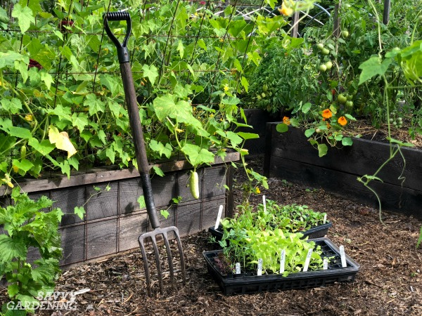 Tips for building a new vegetable garden
