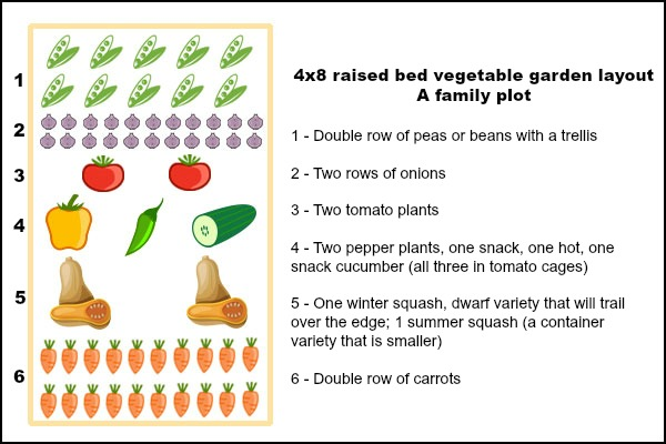 A raised bed layout example for a family plot