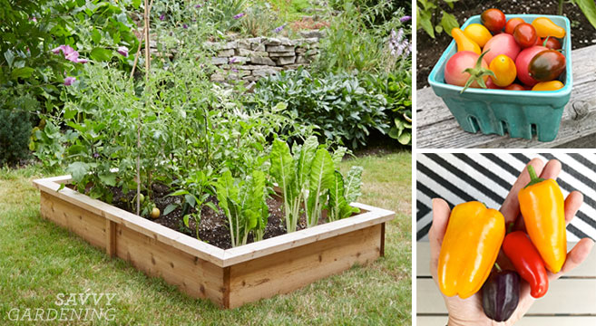 4x8 Raised Bed Vegetable Garden Layout Ideas: What to Sow and Grow