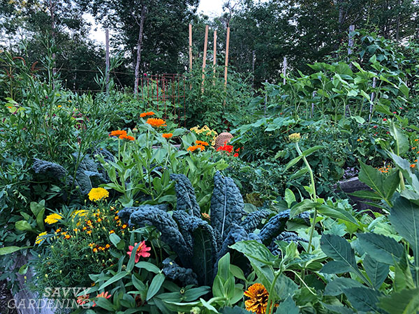 intensive planting in raised beds